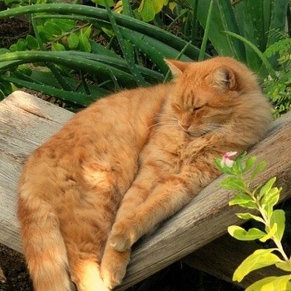 katt_chillar