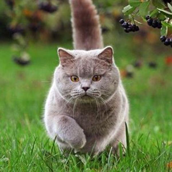 katt_gar