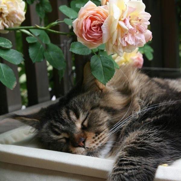 katt_sovmorgon