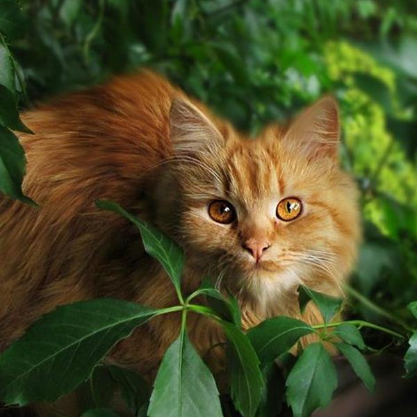 katt_tittar